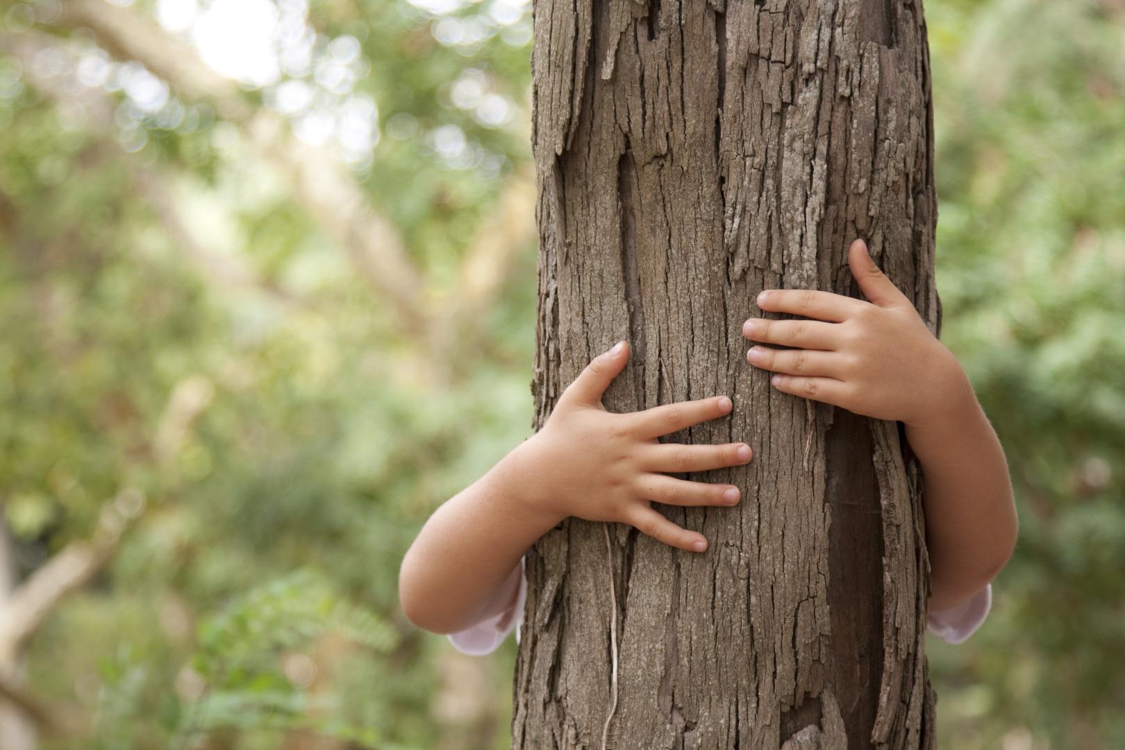 Somfy Polska posadzi swój pierwszy las w Beskidzie Sądeckim
