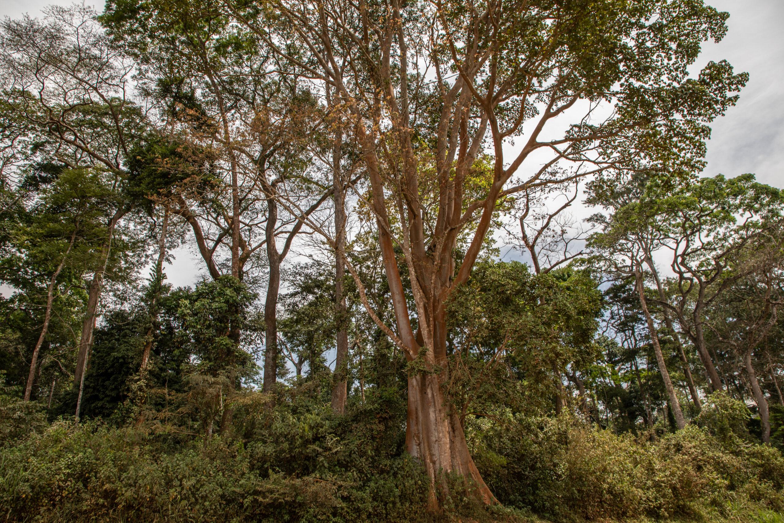 Grupa VELUX i WWF wspólnie rozpoczynają historyczny projekt regeneracji lasów