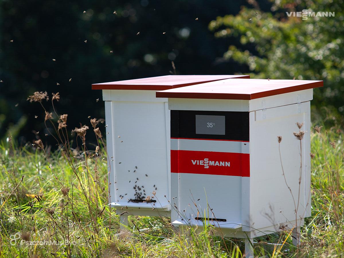 Pomóżmy owadom zapylającym!